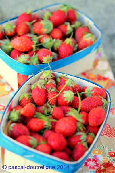 illustration fraises